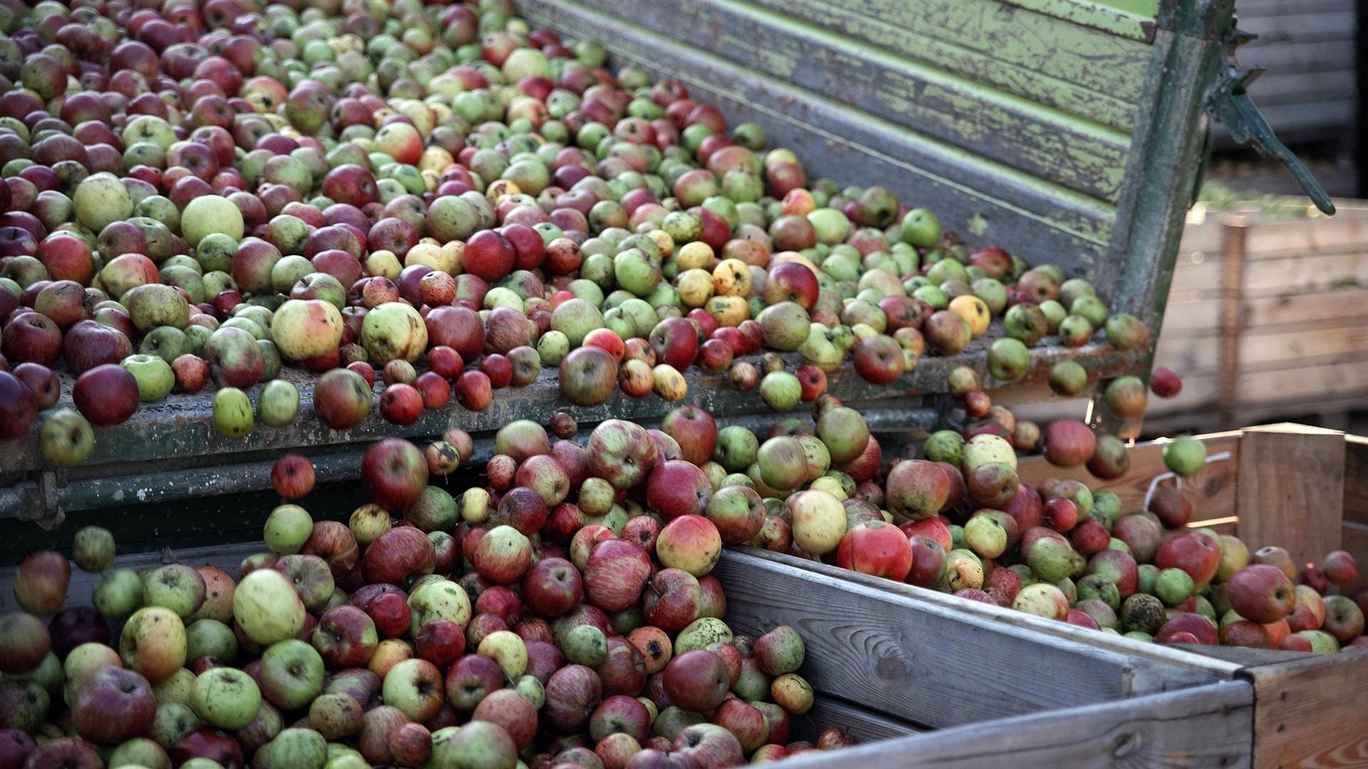 Äpfel Birnen Streuobstwiese Pressen Saft Pankrazhofer
