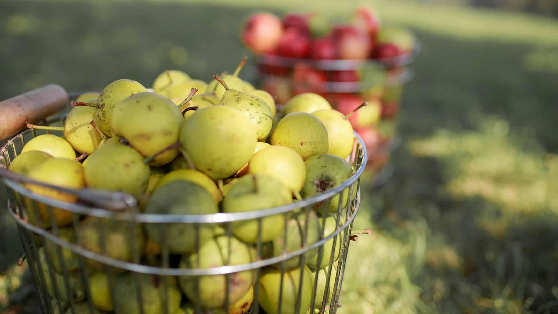 Bio Apfel Birne pressen Saft Pankrazhofer Muehlviertel