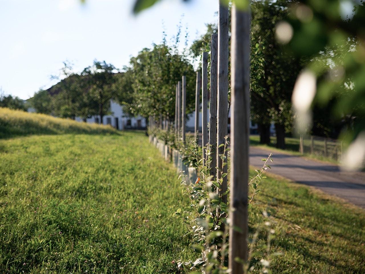 Bio Hof Pankrazhofer Muehlviertel Tragwein Vierkanthof Streuobstwiese